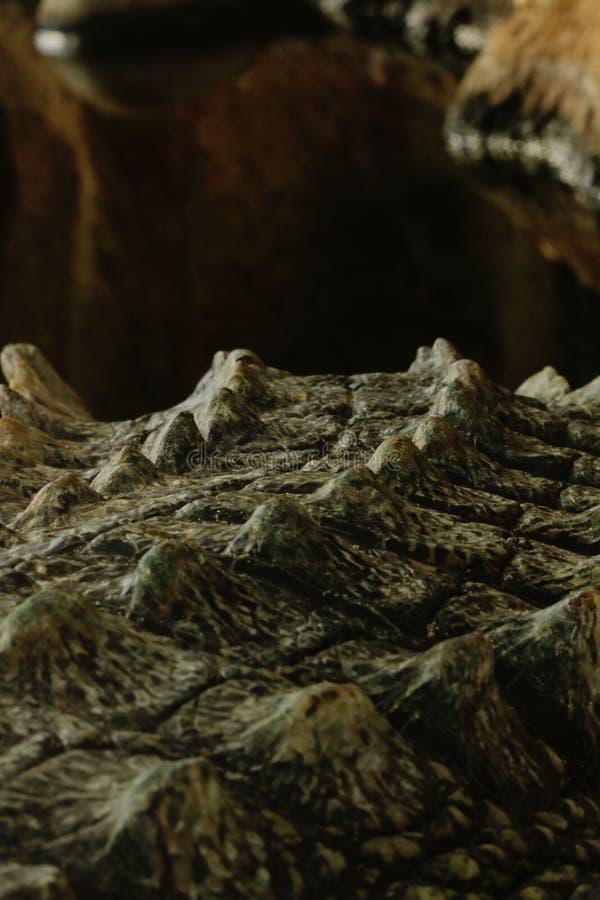 Close-up van een krokodilstaart stock illustratie
