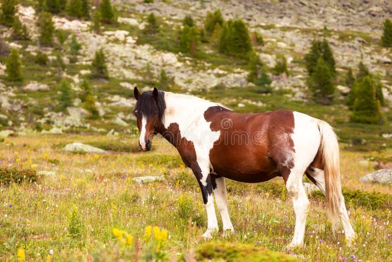 Close-up van een kudde van bruine en witte paarden stock fotografie