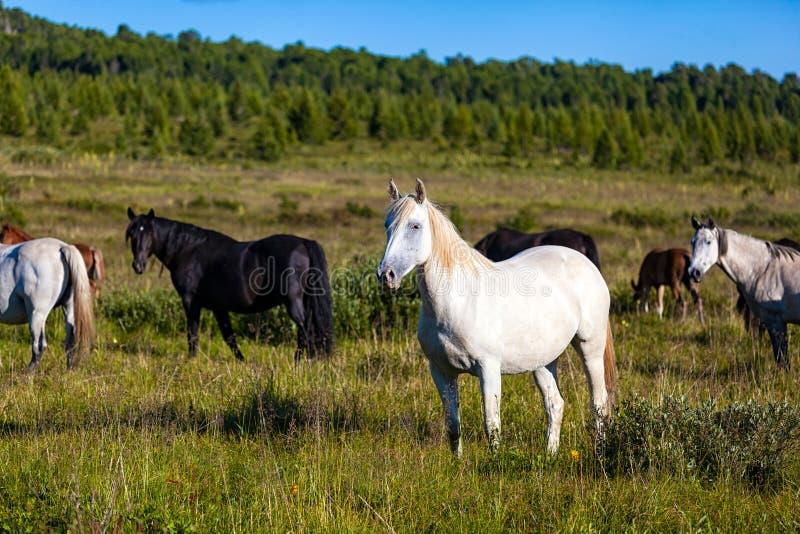 Close-up van een kudde van paarden royalty-vrije stock foto's