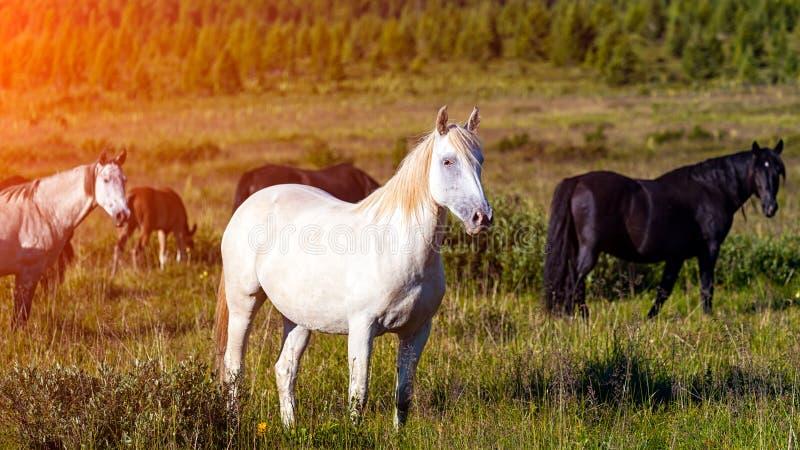 Close-up van een kudde van paarden royalty-vrije stock afbeeldingen