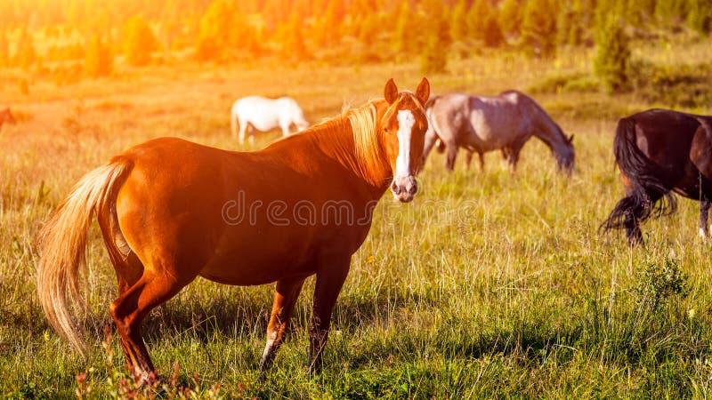 Close-up van een kudde van paarden stock afbeeldingen