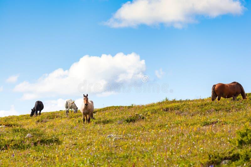 Close-up van een kudde van paarden royalty-vrije stock foto