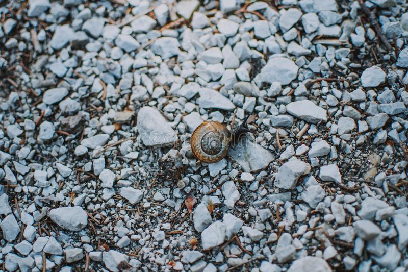 Close-up van een slak in shell op rotsen in een bos wordt geschoten dat stock foto's
