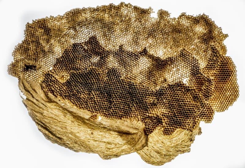 Close-up van een wespnest zonder wespen stock foto's