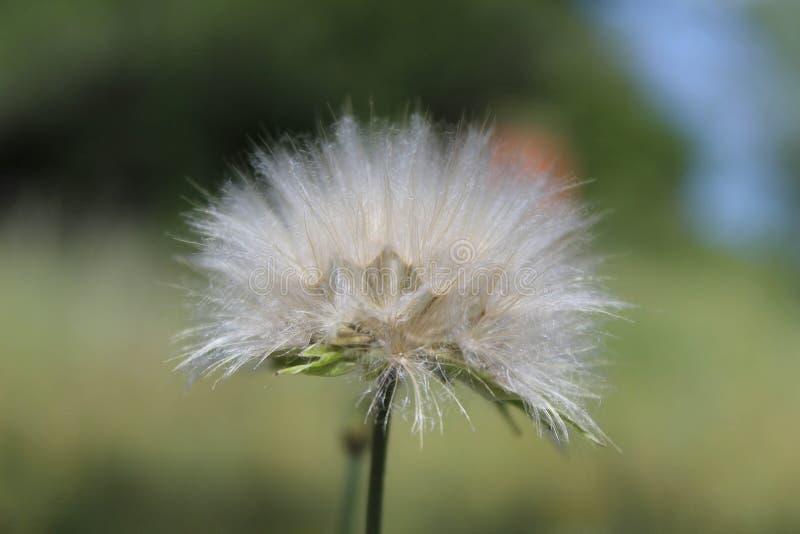 Close-up van een witte bloem royalty-vrije stock fotografie