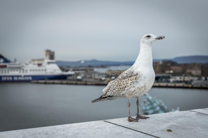 Close-up van een zeemeeuw met haven op de achtergrond royalty-vrije stock afbeelding