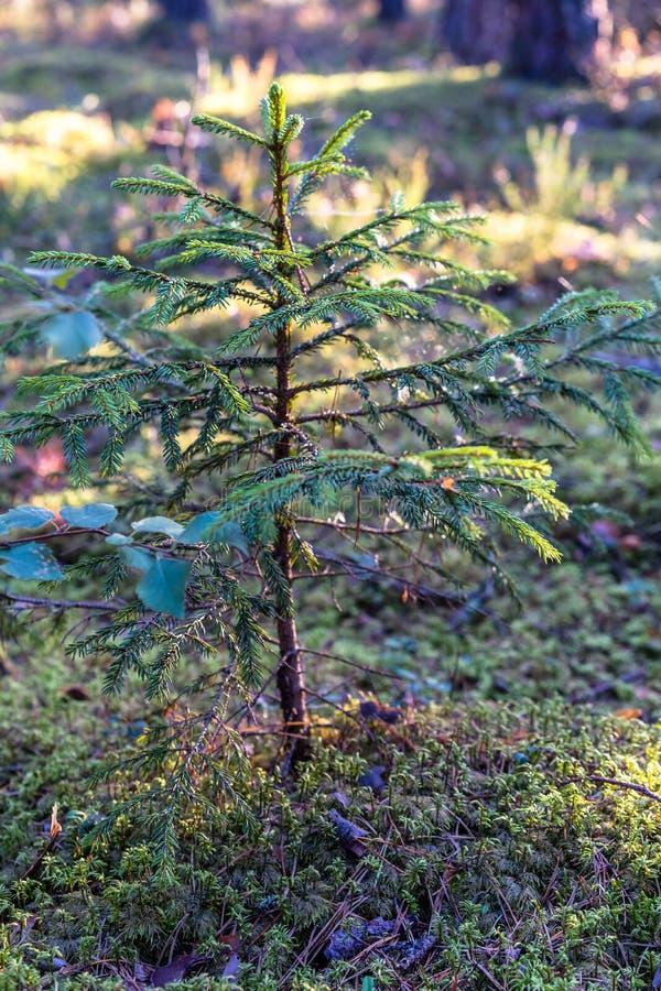 Close-up van Forest Vegetation met Gras en Gebladerte stock afbeelding