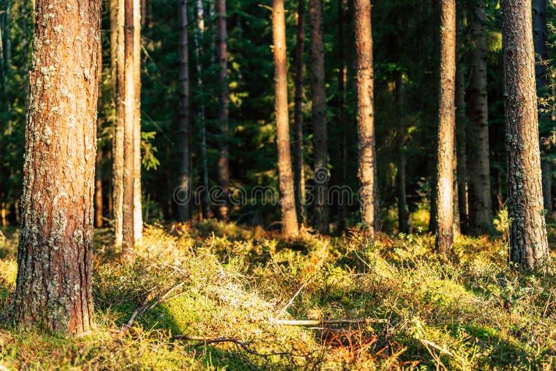 Close-up van Forest Vegetation met Gras en Gebladerte stock afbeeldingen