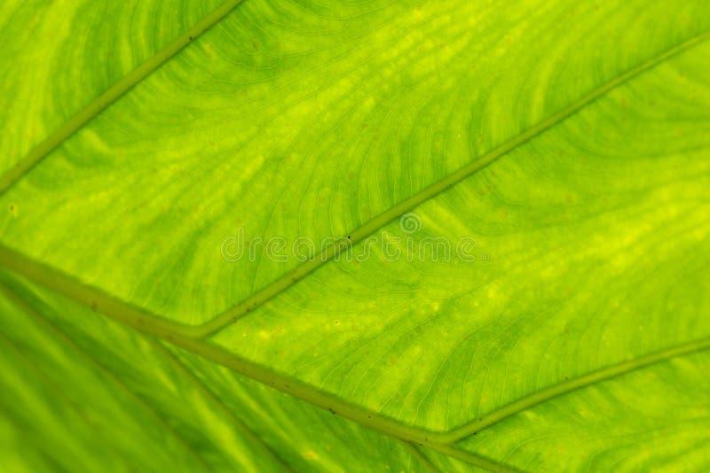 Close-up van groen blad stock afbeeldingen