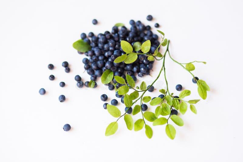 Close-up van groene stam en bosbessenbladeren op wit geïsoleerde achtergrond Het concept gezond voedsel, vitaminen royalty-vrije stock afbeeldingen