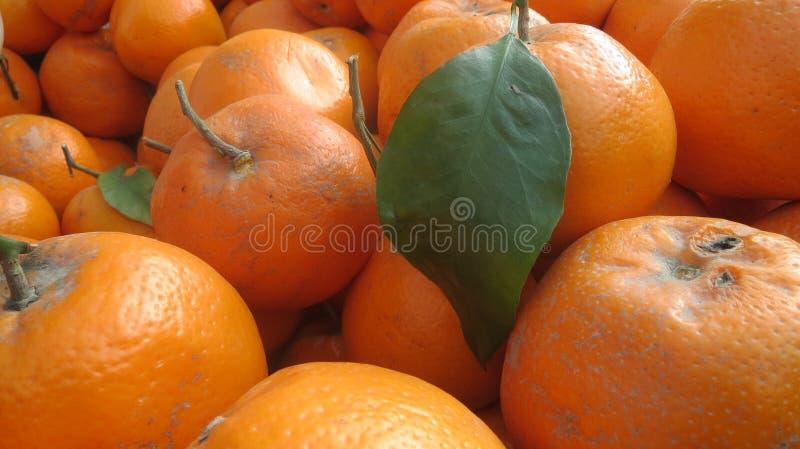 Close-up van groep sinaasappelen stock afbeelding
