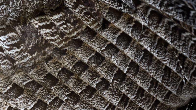 Close-up van groot-Gehoornde uilvleugel royalty-vrije stock afbeeldingen
