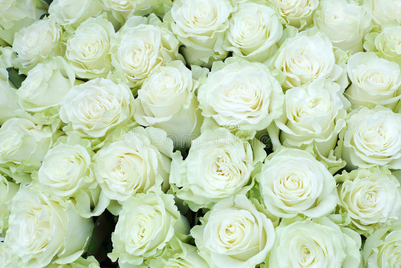 Close-up van heldere bos van vers gesneden grote witte rozen royalty-vrije stock afbeelding