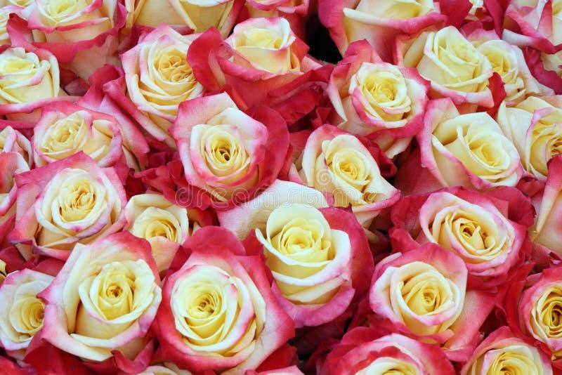 Close-up van heldere bos van vers gesneden mooie rozen stock foto