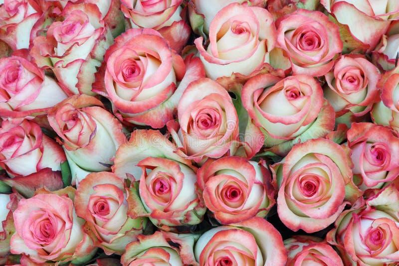 Close-up van heldere bos van vers gesneden rozen. royalty-vrije stock afbeelding