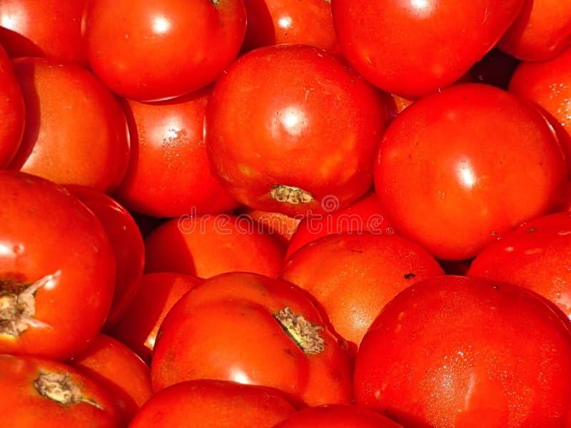 Close-up van heldere rode tomaten stock fotografie
