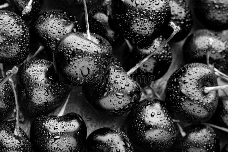 Close-up van heldere zwarte rijpe kersen ongebruikelijke blauwe achtergrond Grote inzameling van verse zwarte kersen royalty-vrije stock foto's