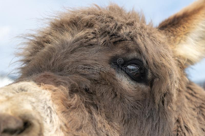 Close-up van het gezicht van een ezel royalty-vrije stock foto's