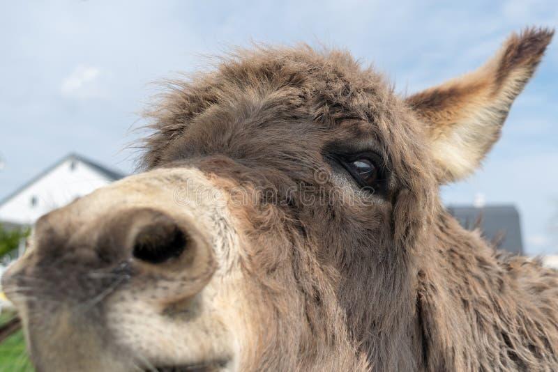 Close-up van het gezicht van een ezel royalty-vrije stock afbeeldingen