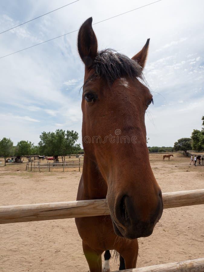 Close-up van het hoofd van een paard stock foto
