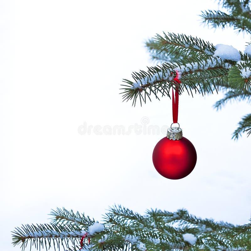 Close-up van het rode de Bal van de Kerstmissnuisterij hangen op de takken van de pijnboomboom stock afbeelding