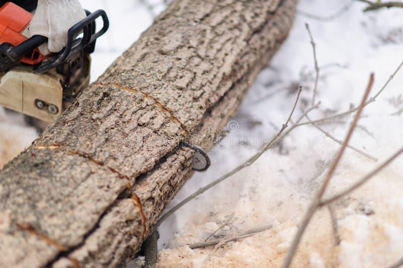 Close-up van houthakker die kettingzaag in motie, zaagselvlieg aan kanten zagen stock afbeeldingen