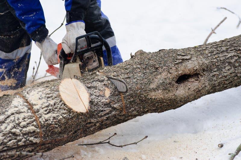 Close-up van houthakker die kettingzaag in motie, zaagselvlieg aan kanten zagen royalty-vrije stock afbeelding