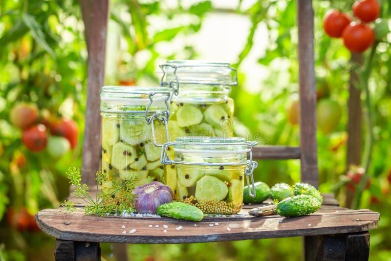Close-up van ingelegde komkommers in kleine serre royalty-vrije stock foto's