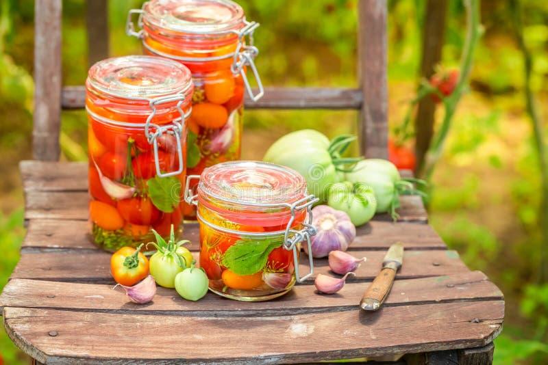 Close-up van ingelegde rode tomaten in kleine de zomerserre stock afbeeldingen