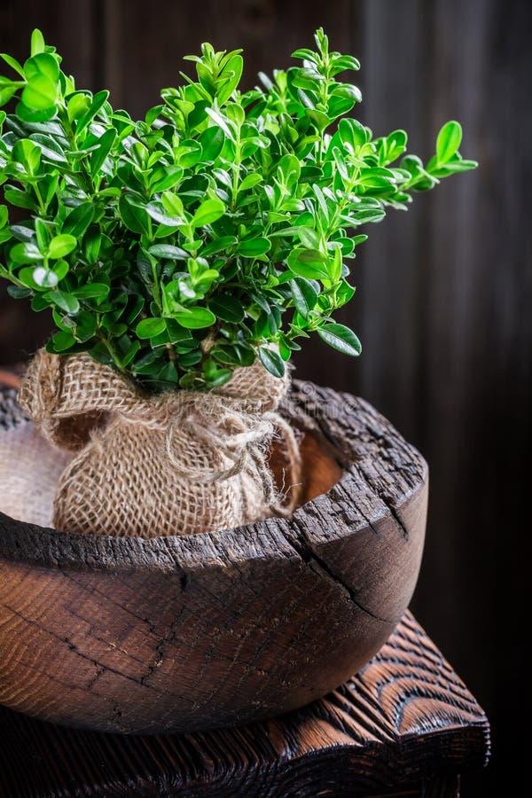 Close-up van kleine zaailingsboom als nieuw leven stock afbeeldingen