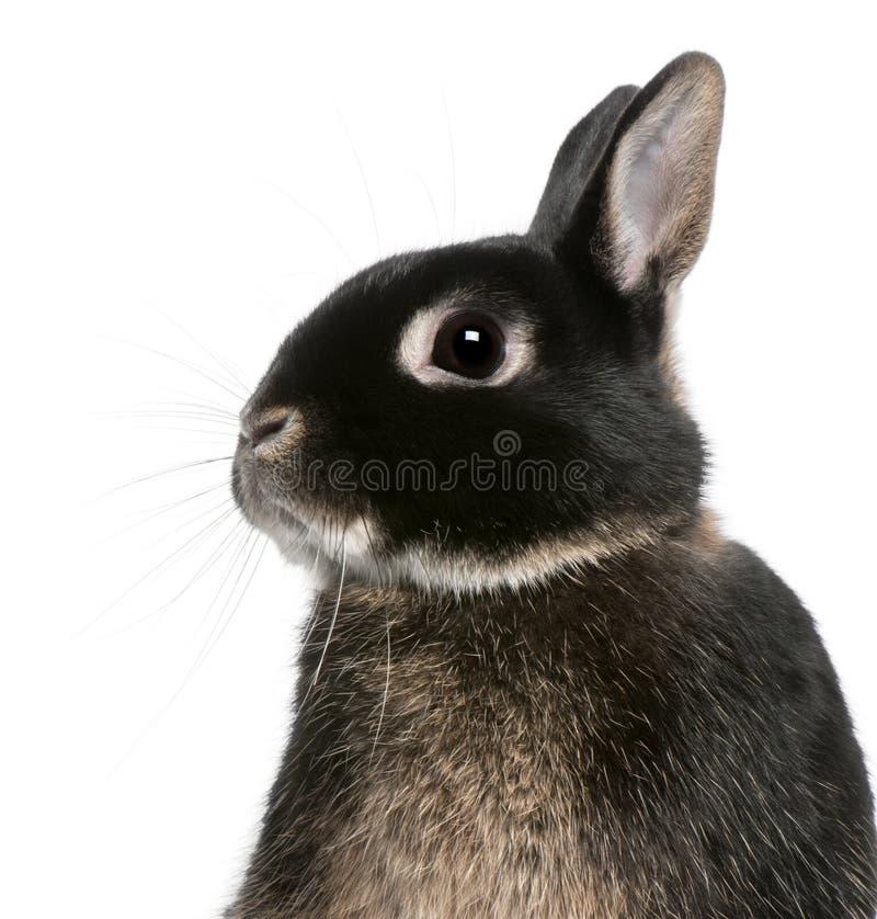 Close-up van konijn stock afbeelding