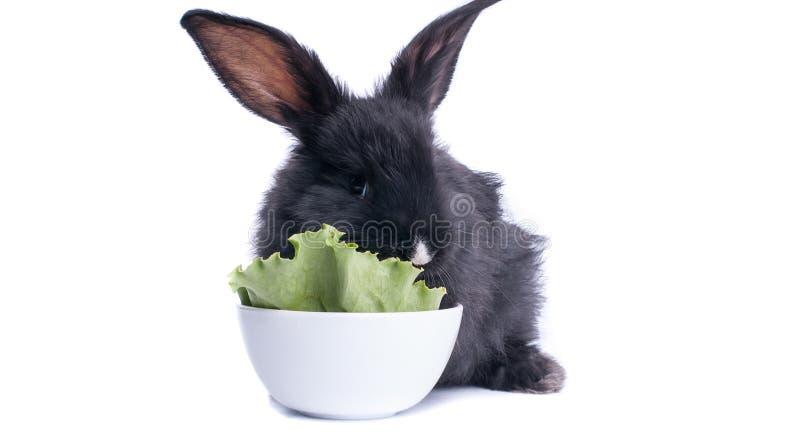 Close-up van leuk zwart konijn die groene salade eten stock fotografie