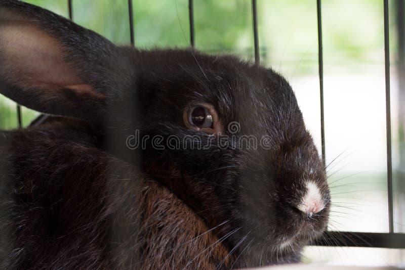 Close-up van leuk zwart konijn stock foto