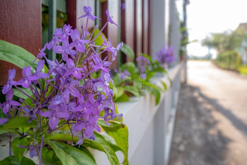 Close-up van leuke kleine violette bloemen op omheining met vage achtergrond stock foto's