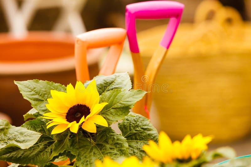 Close-up van mooie gele bloemen, zonnebloemen stock afbeelding