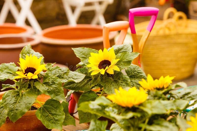 Close-up van mooie gele bloemen, zonnebloemen royalty-vrije stock foto