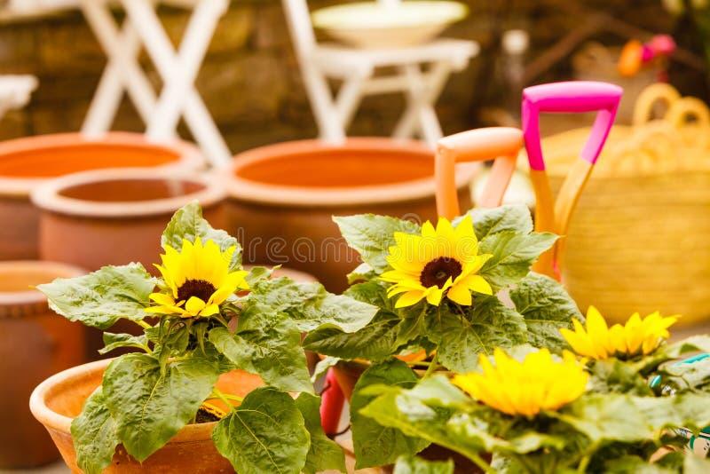 Close-up van mooie gele bloemen, zonnebloemen stock foto
