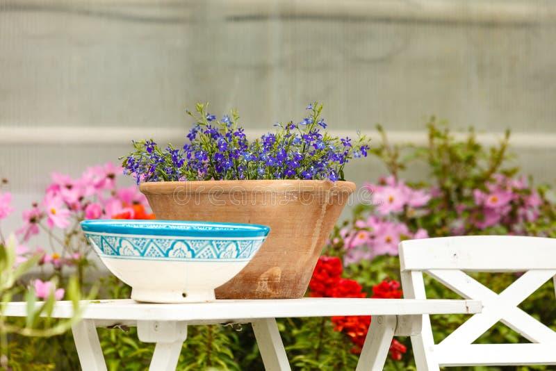 Close-up van mooie purpere bloemen, viooltjes stock fotografie