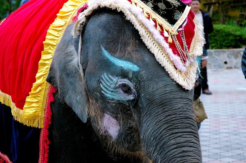 Close-up van olifant royalty-vrije stock fotografie