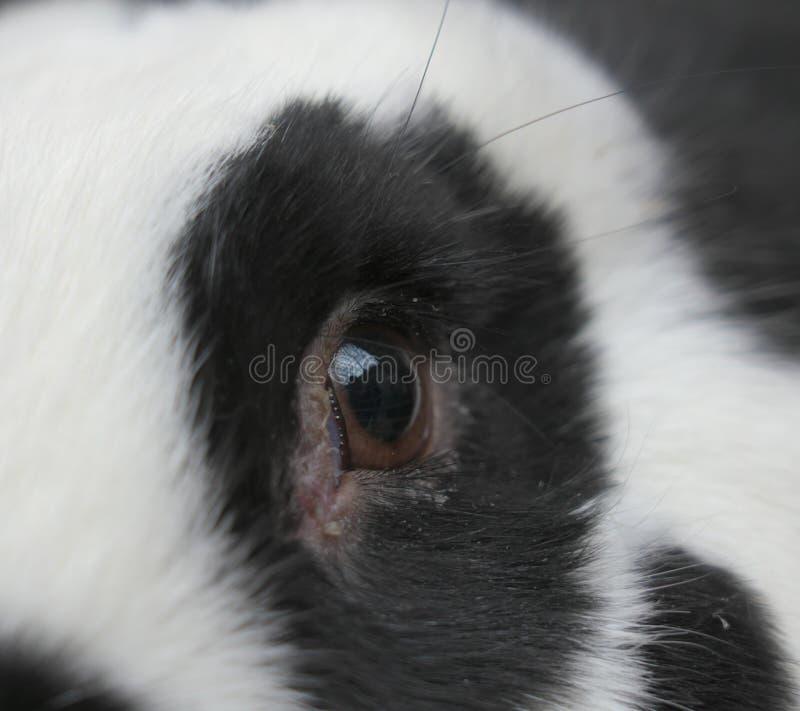 Close-up van oog van een konijn royalty-vrije stock afbeeldingen