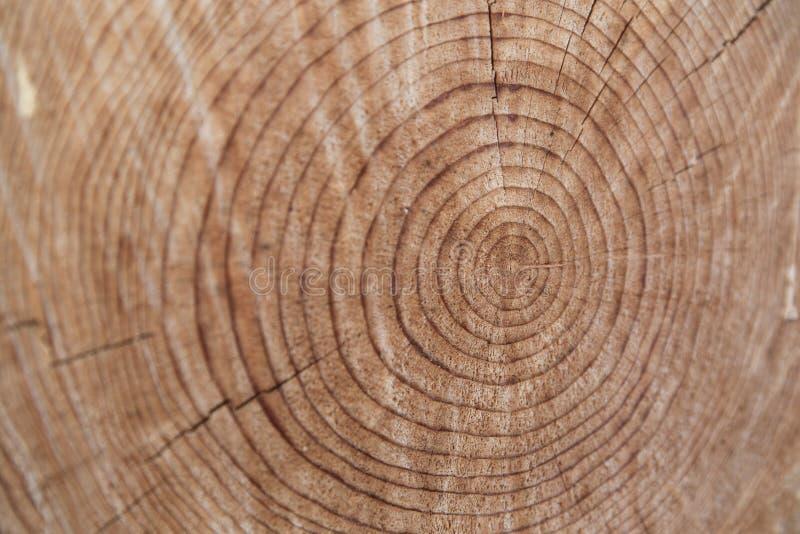 Close-up van oude besnoeiings houten boomstam royalty-vrije stock fotografie