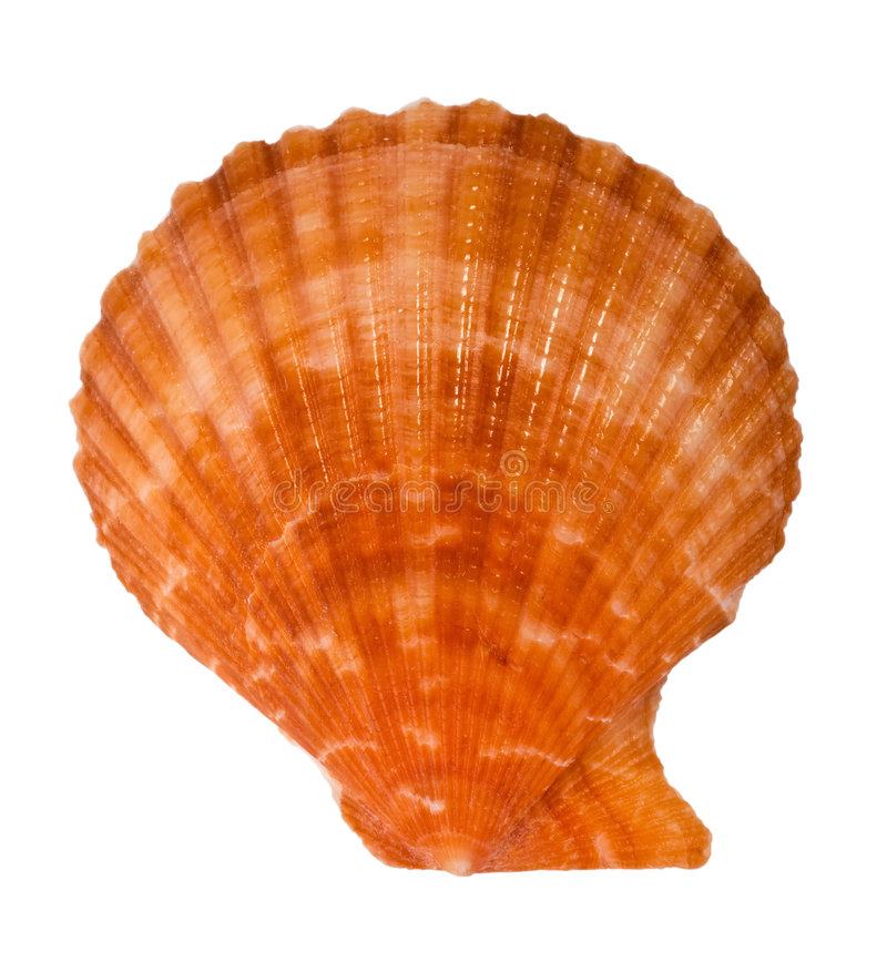 Close-up van overzees shell knipsel royalty-vrije stock afbeelding