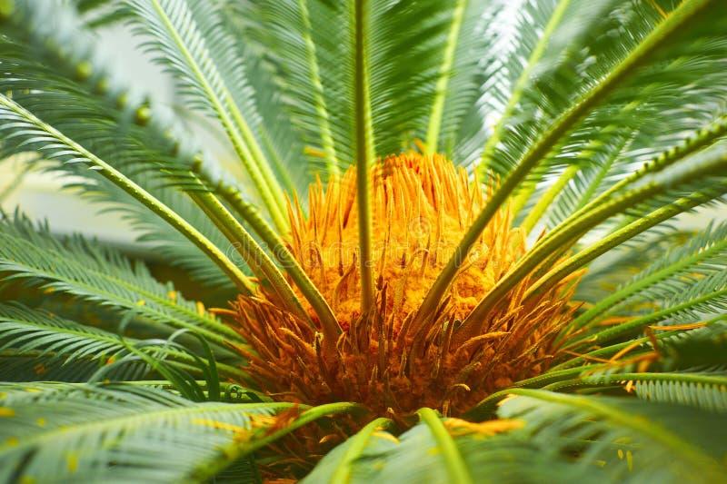 Close-up van palmtree royalty-vrije stock afbeeldingen