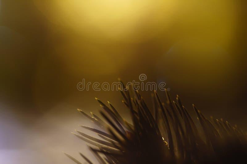 Close-up van pijnboomnaalden op de achtergrond van vage lichten stock afbeeldingen