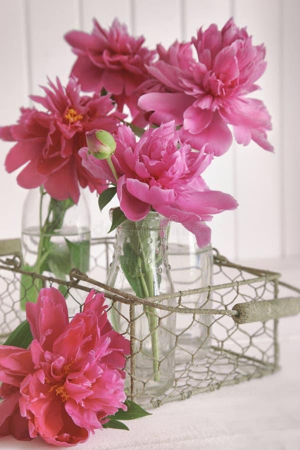 Close-up van pioenbloemen in flessen royalty-vrije stock afbeeldingen