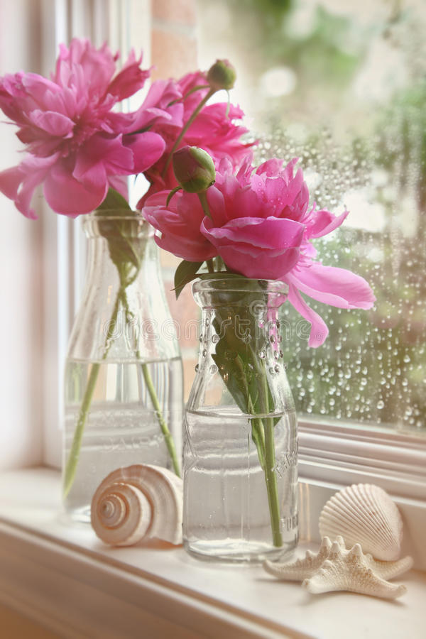 Close-up van pioenbloemen in melkflessen stock afbeeldingen