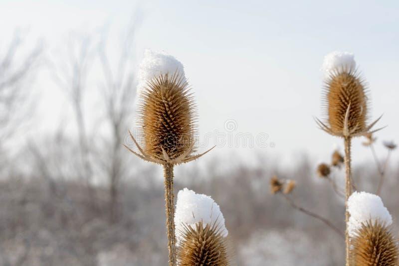 Close-up van prairieinstallaties in de winter stock fotografie