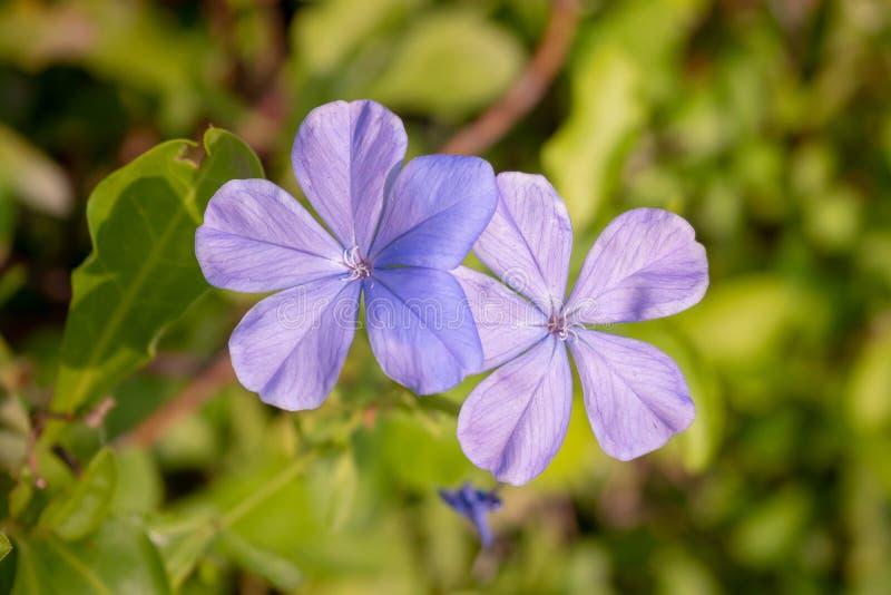 Close-up van purpere bloemen op vage groene bladachtergrond royalty-vrije stock foto