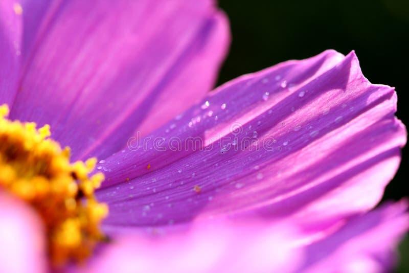 Close-up van roze bloem   stock afbeelding