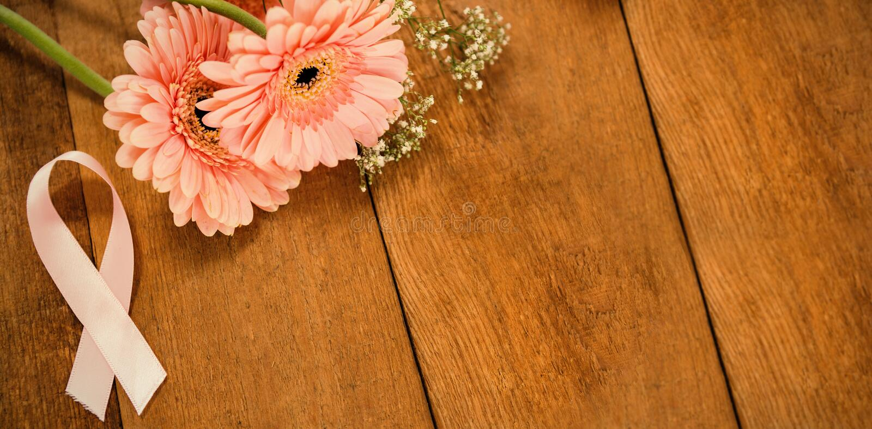 Close-up van roze de Voorlichtingslint van Borstkanker door gerberabloemen stock fotografie